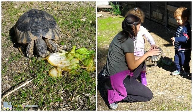 Con calma, scopriamo le tartarughe, meno timide dei coniglietti...