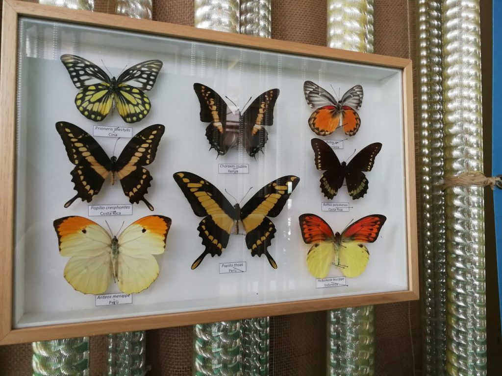 Butterfly House Sardegna I pannelli didattici