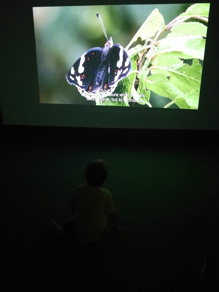 Butterfly House Sardegna Il cinema