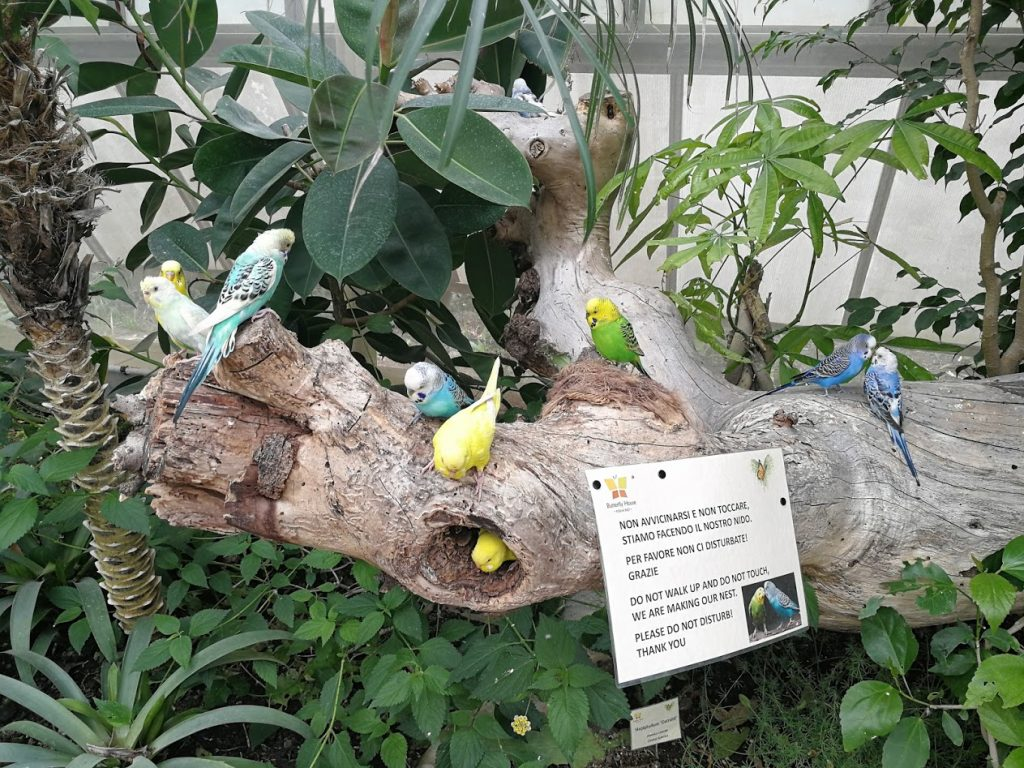 Butterfly House Sardegna Le cocorite