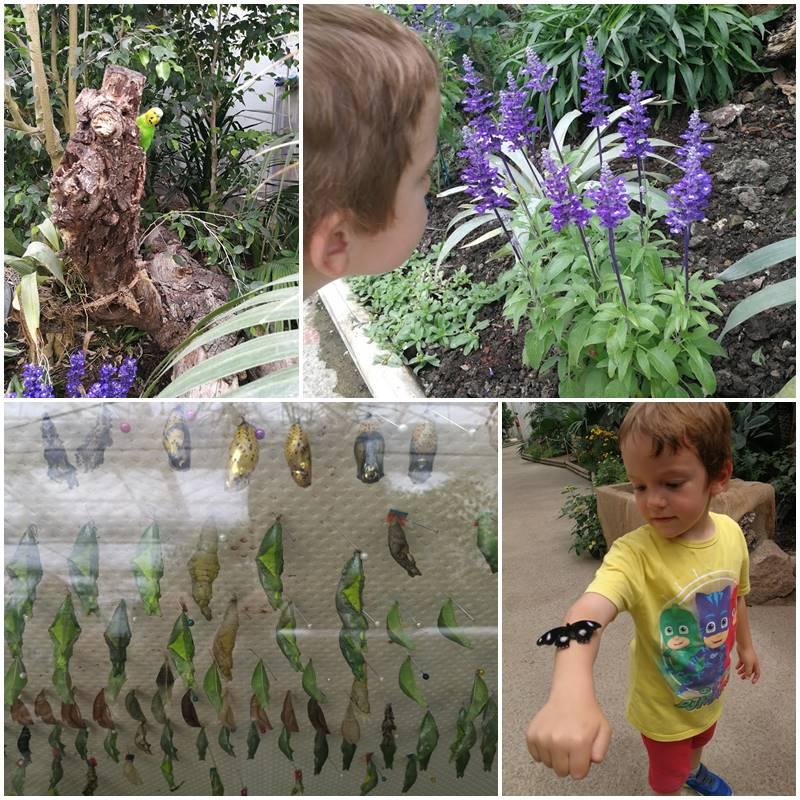 Butterfly House Sardegna Farfalle e crisalidi