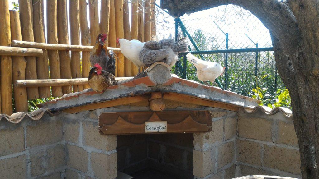 zoo maitine aia