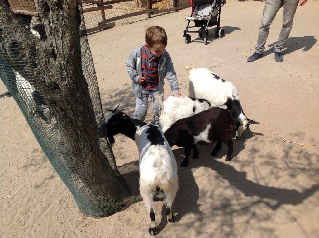 zoo maitine ciao papa guarda