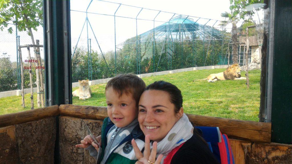 zoo maitine leoni