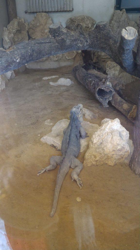 zoo maitine rettili