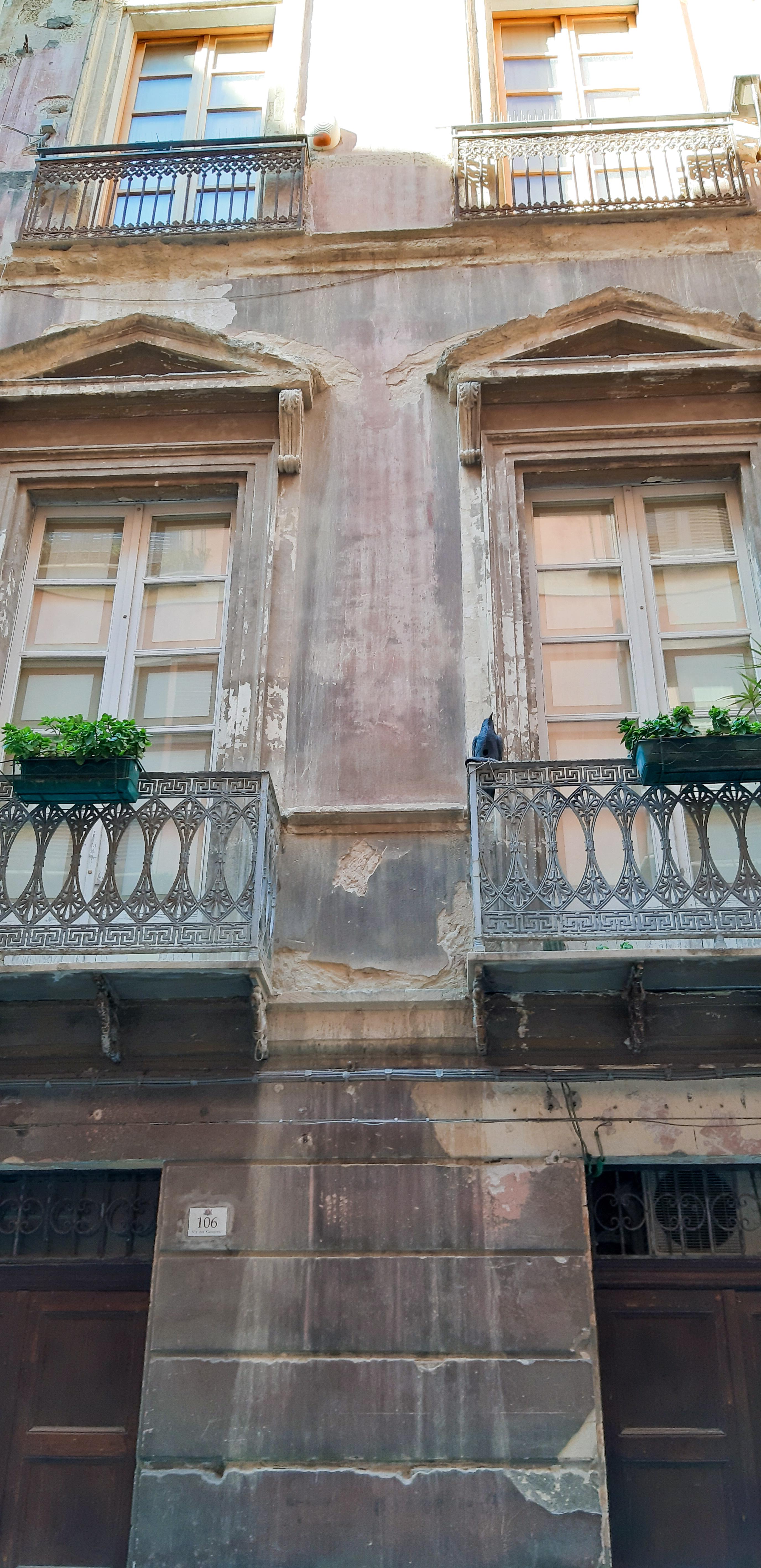 Corvo in via dei Genovesi a Cagliari