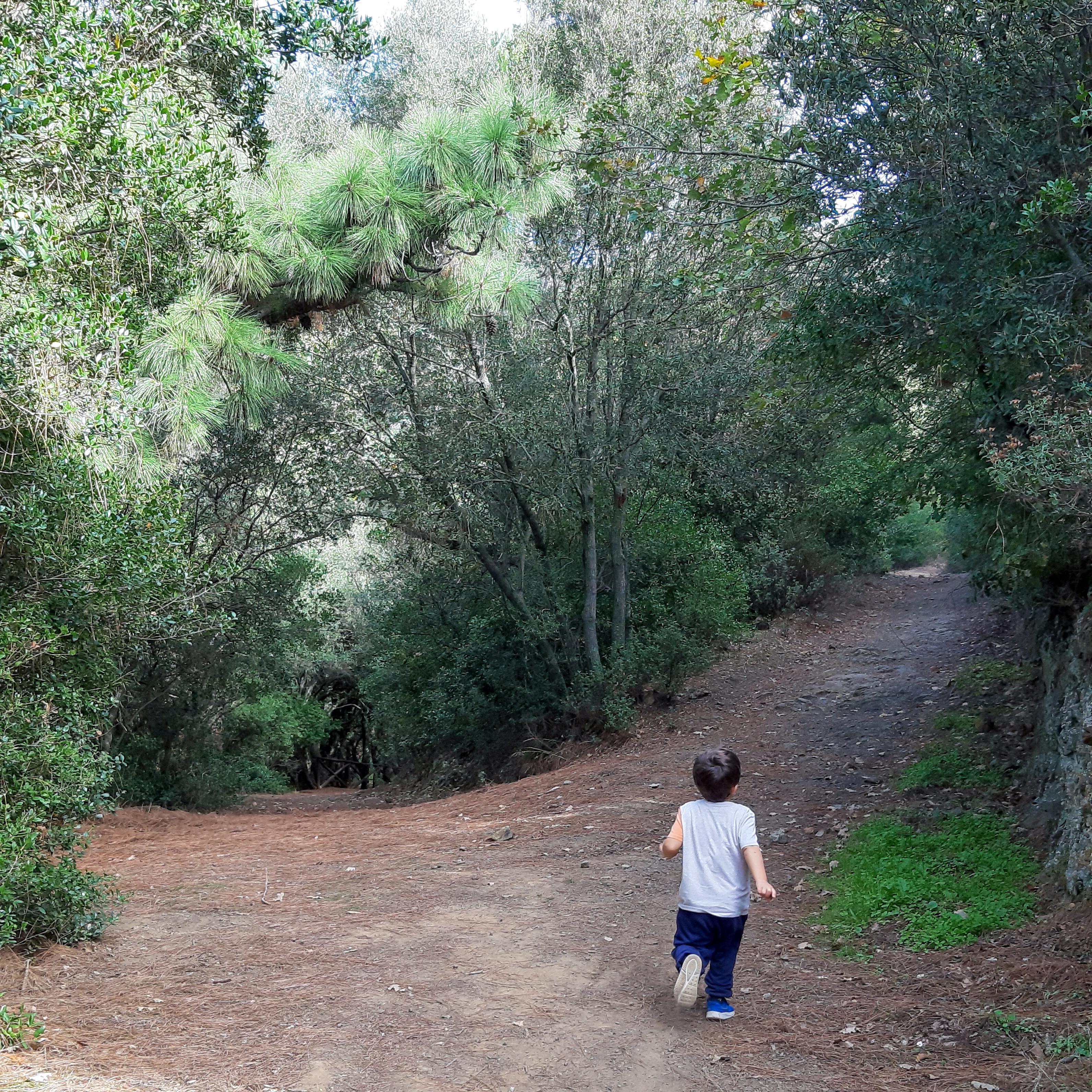 Foresta del Campidano
