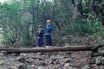 foresta vicino a Cagliari